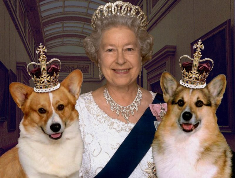 The-Queen-with-two-corgie-photo
