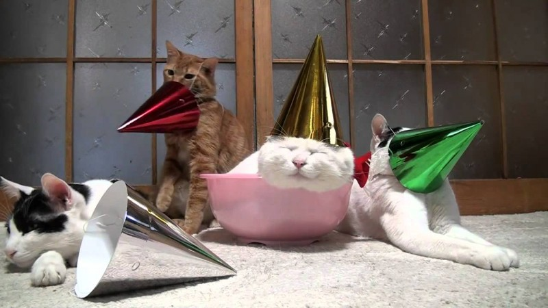 cat-party-pic