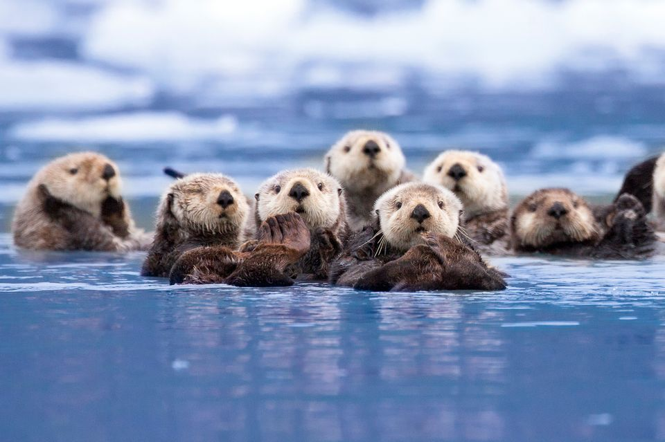 cute-otter-pic