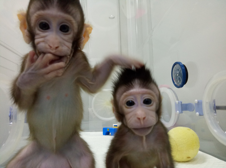 monkeys-clones-pics