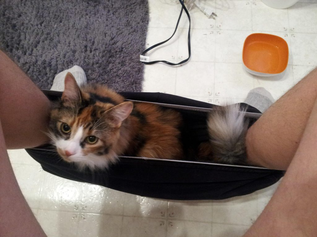 """If it fits I sits"" or 15 Hilarious Photos of Our Pets Resting in Unusual Places"