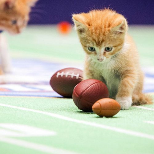 fluffy-super-bowl-photo