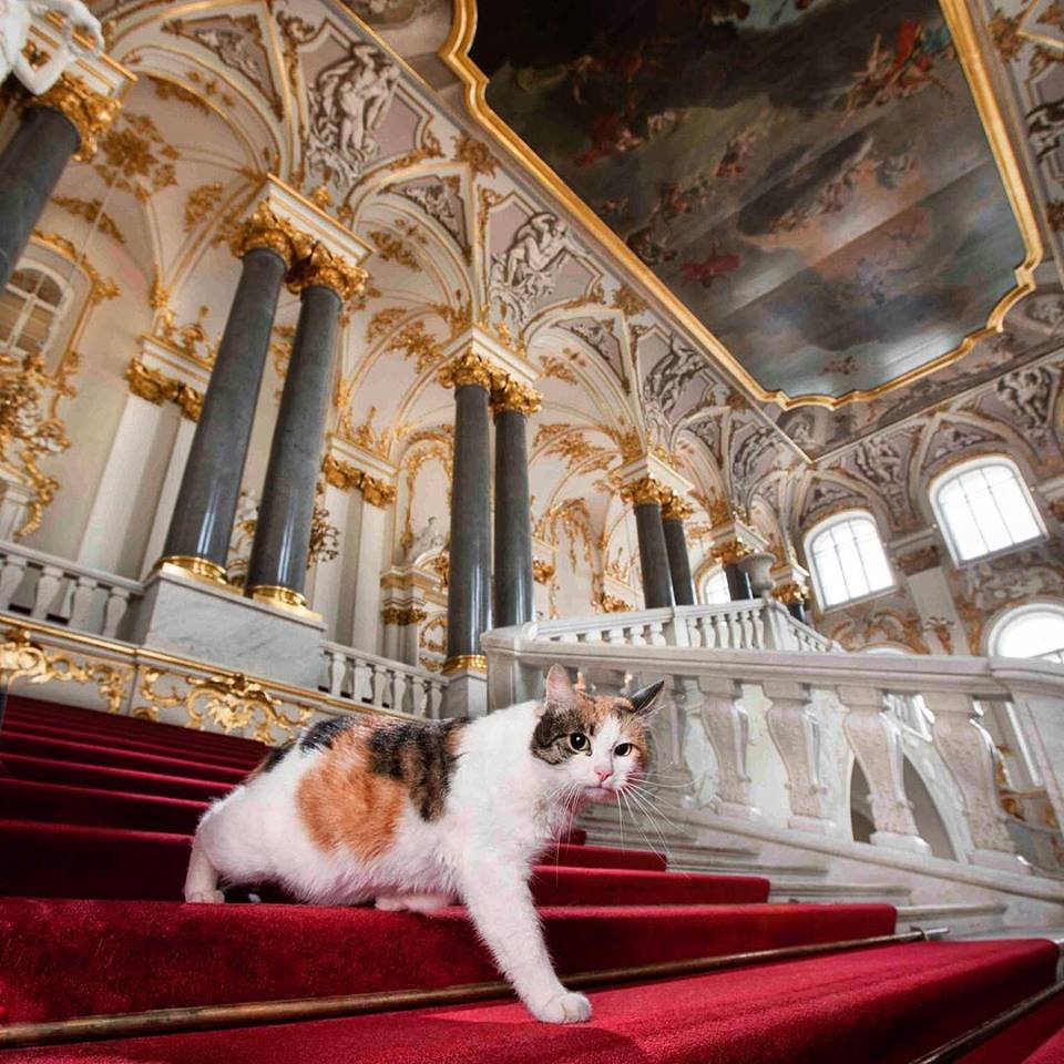 Hermitage is Ruled by Cats! See 11 Most Surprising Facts about Russia