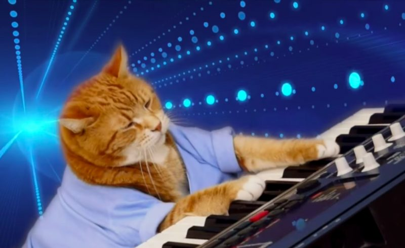 bento-keyboard-cat-died-pic