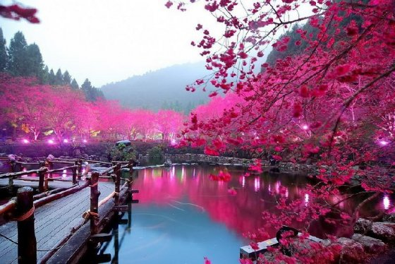 blossom-china-pic