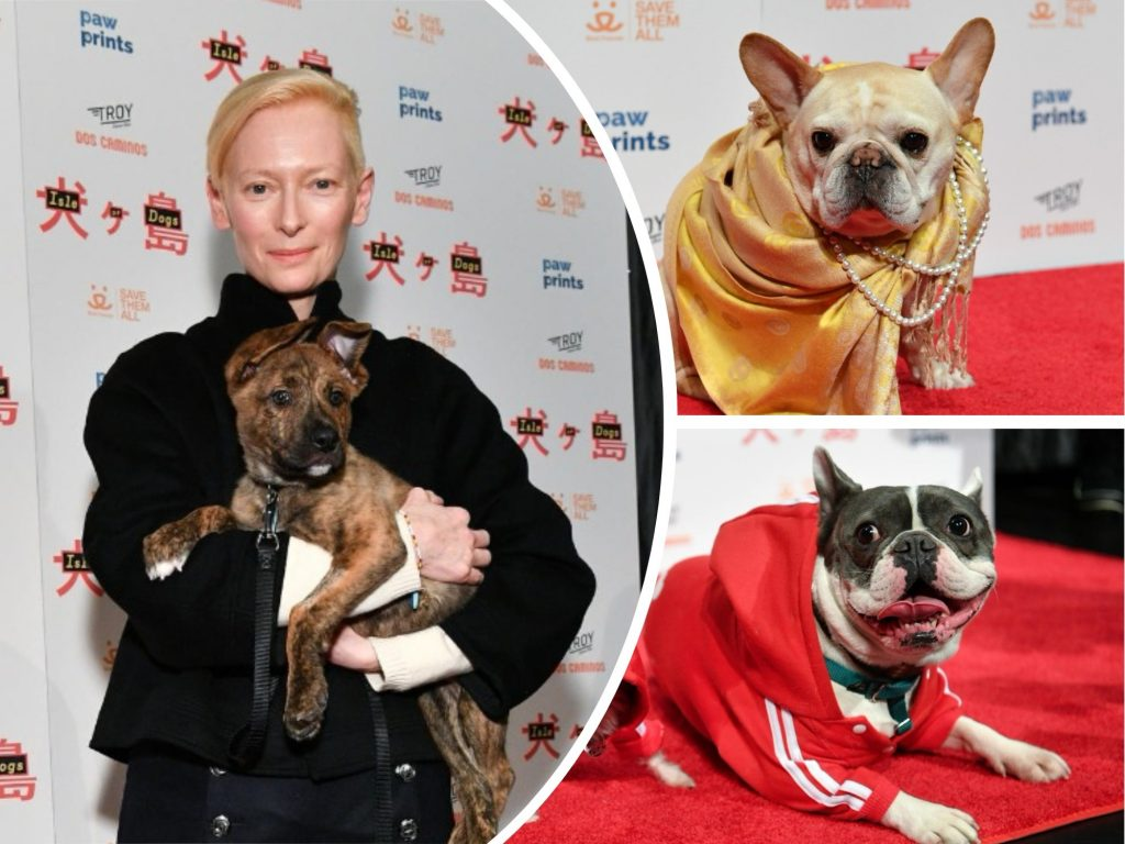 Cute Pups EVERYWHERE: Ireland's First Dog-Friendly Movie and 'Isle of Dogs' Red Carpet