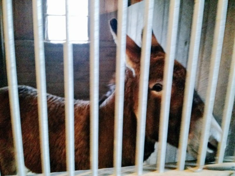 donkey-in-jail-pic