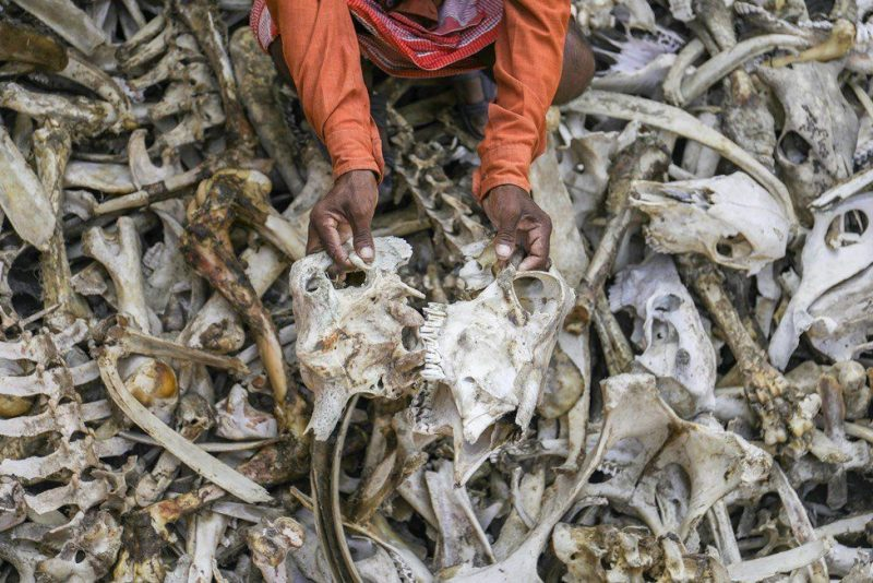india-bone-collector-photo