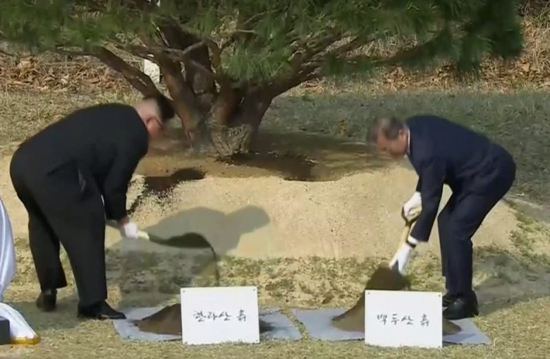 korea-summit-tree-photo