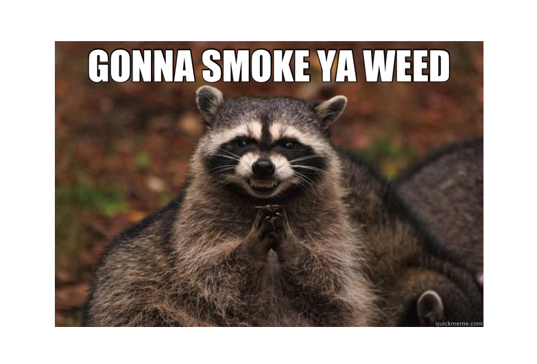 Pet Raccoon Got High and Made Laugh Firefighters + 3 More Animals Stoned of Cannabis (Hilarious PHOTOS) + Video