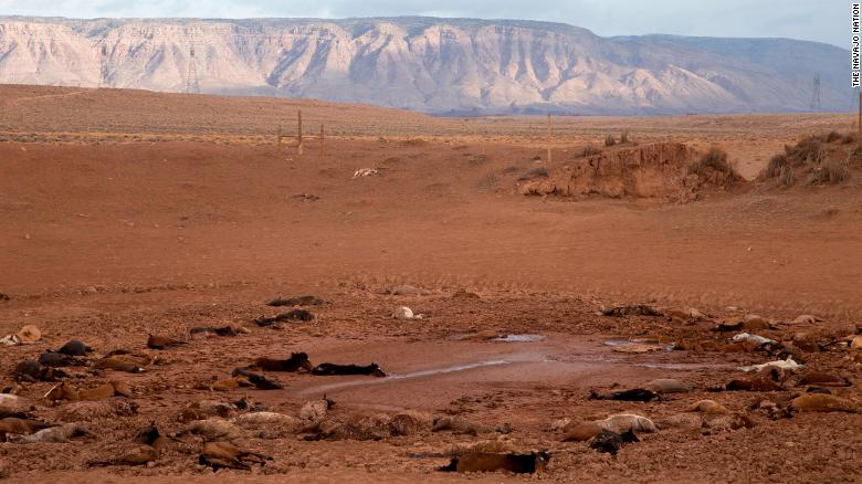arizona-dead-horses-photo