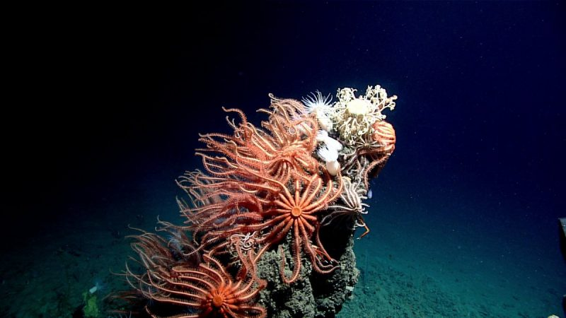deep-sea-life-photo