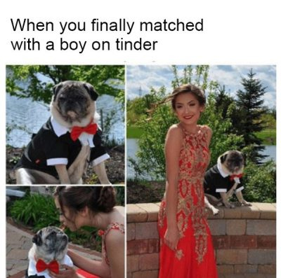 puglife-on-tinder