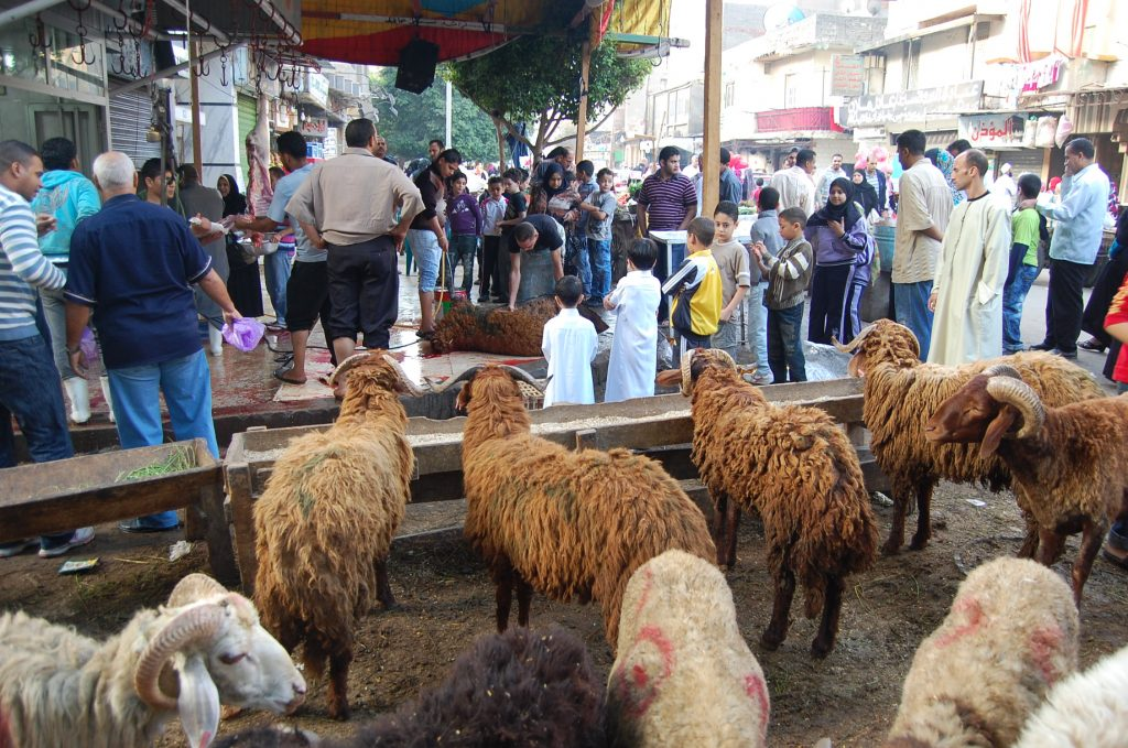 Sheep-Eid-holiday-Egypt-pics