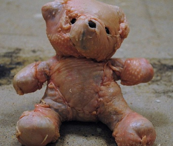 teddy-bear-chicken-skin-photo