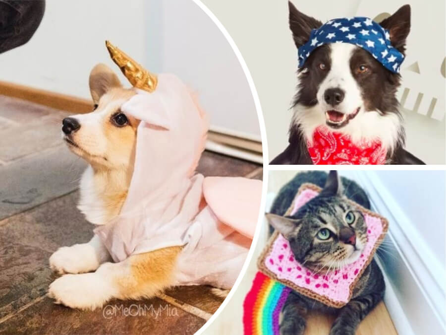 Cute Nightmare! 9 Adorable Halloween Costume Ideas for Your Cat or Dog in 2018