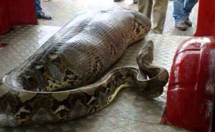 The Most Shocking Snake Attacks: They Can Swallow the Whole Human and Bite Even When They Are Dead!