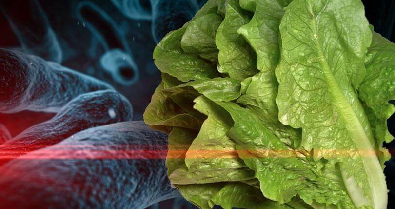 ALERT! Don't Eat Romaine Lettuce! Officials Warns About E. Coli Outbreak That Sickened 32 People in 11 States