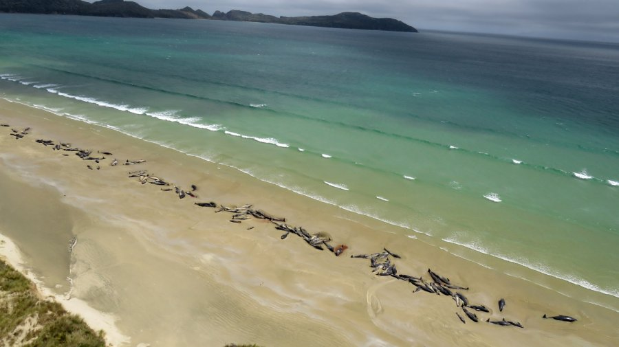 whales-new-zealand-died-photo