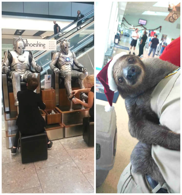 14 Crazy and Funny Things You Can Only Observe at the Airport - From Cute Puppies To Stormtroopers!