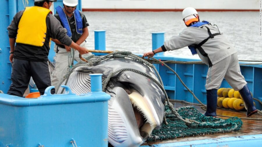 Japan to Resume Commercial Whaling in 2019, Medical Marijuana Legalized in Thailand + 3 More Hot News of Wednesday, Dec.26
