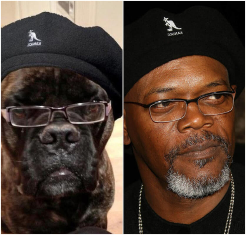 10 Hilarious Pics of Animals Who Turned Out to Be Celebrity Doppelgangers - Some of Them Look Exectly the Same!