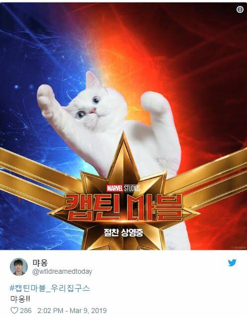 Twitter Users Created a Viral Trend of Pet Cats Edited into 'Captain Marvel' Poster