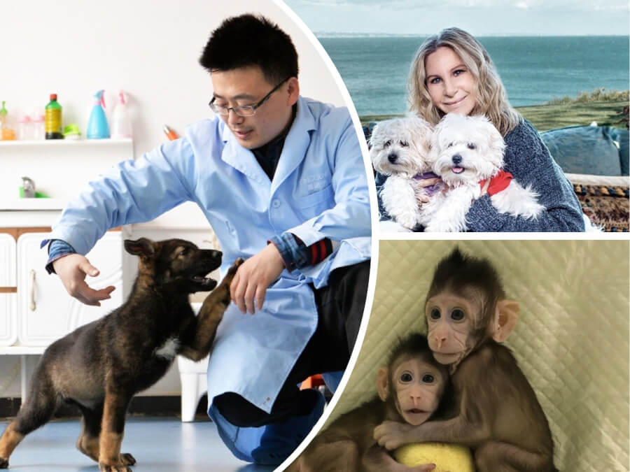 Animal Cloning: 5 Successful Cases That Changes Understanding of Science Forever