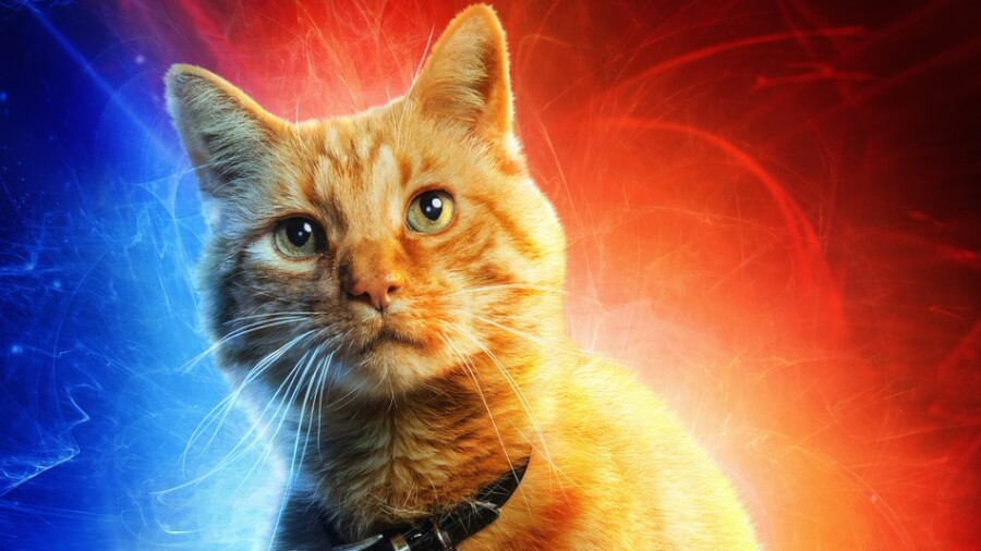 goose-cat-captain-marvel-photo