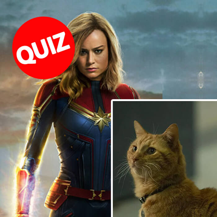 quiz-pet-marvel-pic