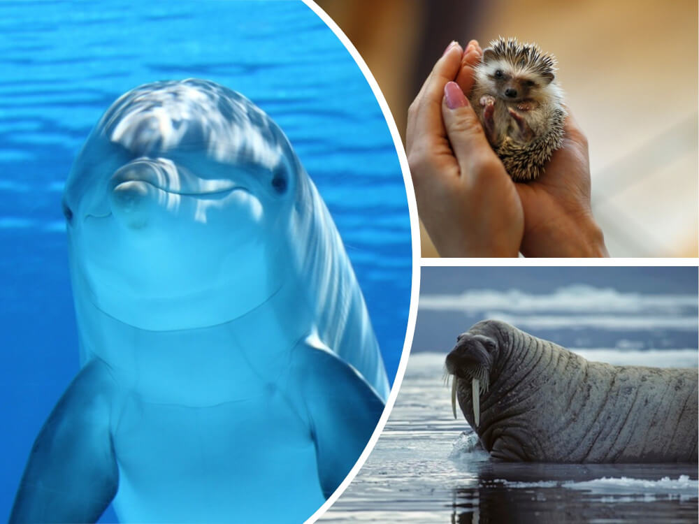 6 Amazing Animals Who Can Masturbate Not Using Their Hands