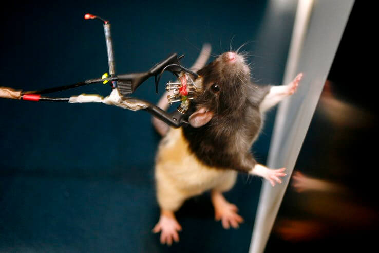 creepy-science-experiments-with-animals-photo