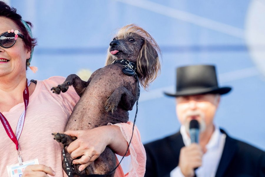 worlds-ugliest-dog-2019-photo