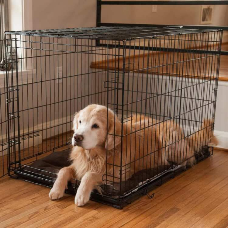 crate-dog-to-choose-photo