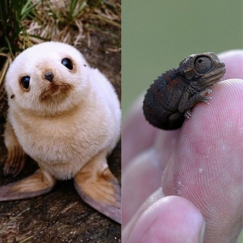 30 Most Adorable Baby Animals - Warning: Cuteness Overdose