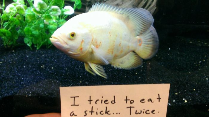 Fish Shaming Exists! Fish Owners Hilariously Shamed Their Aquarium Inhabitants For Naughty Behavior