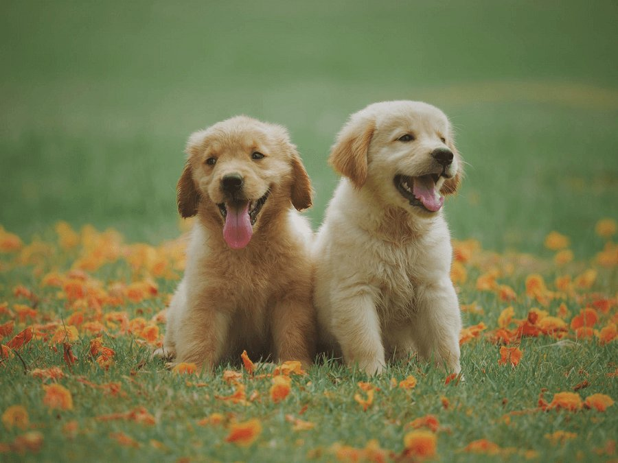 nice-puppies-photo