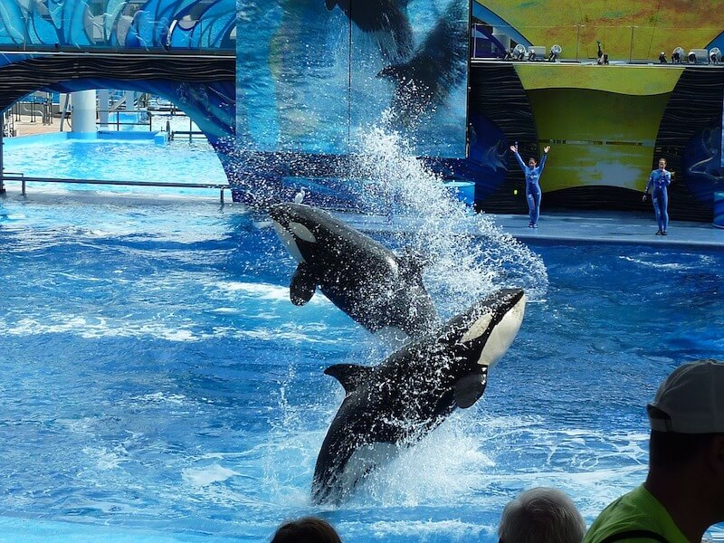 SeaWorld_photo