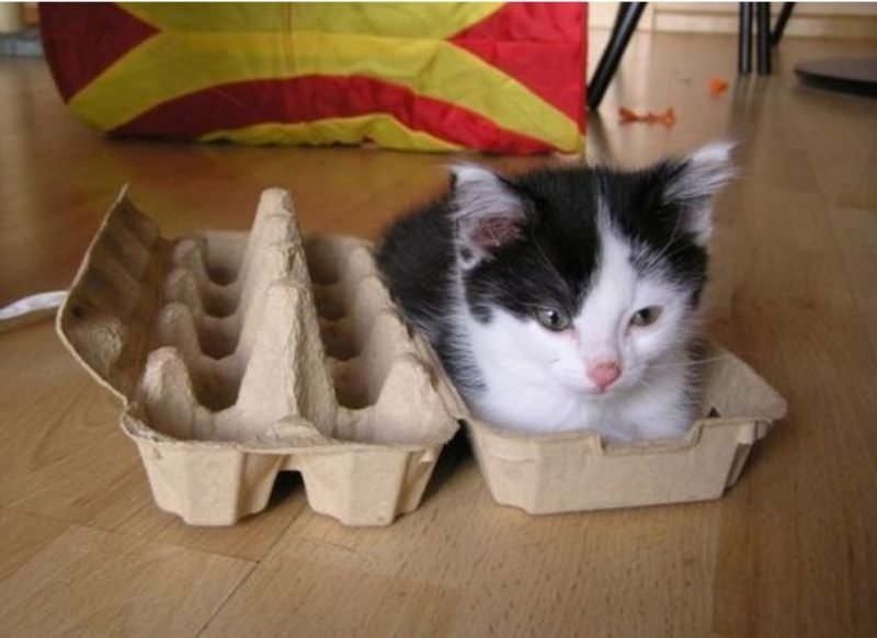 cat-in-box-photo