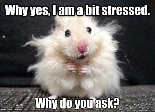 stressed-funny-pics