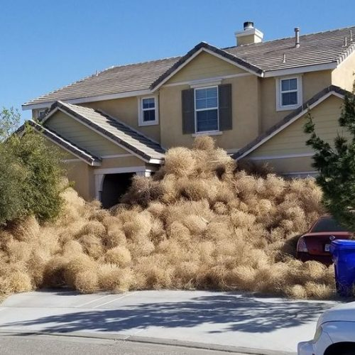 tumbleweed-invasion-california-pics
