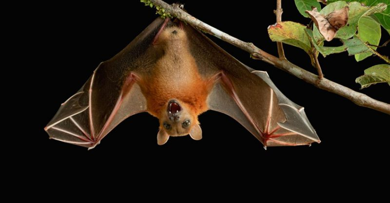 Nipah-Virus-india-photo