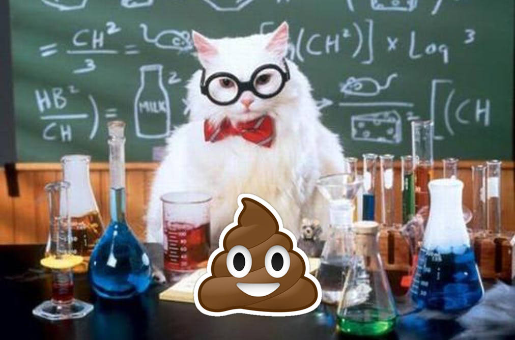 cat-poop-science-parasite-fear-pic-1