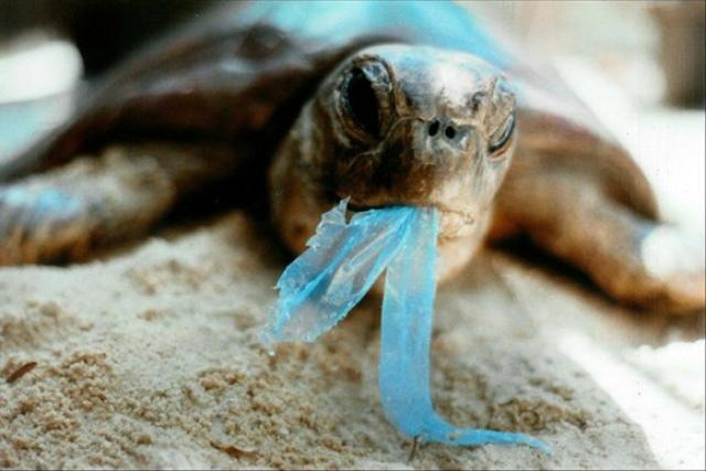 plastic-ban-photo