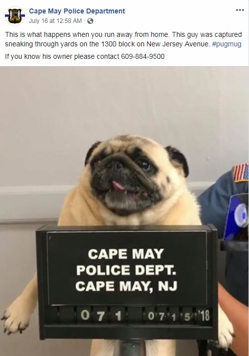 pug-arrested-pic
