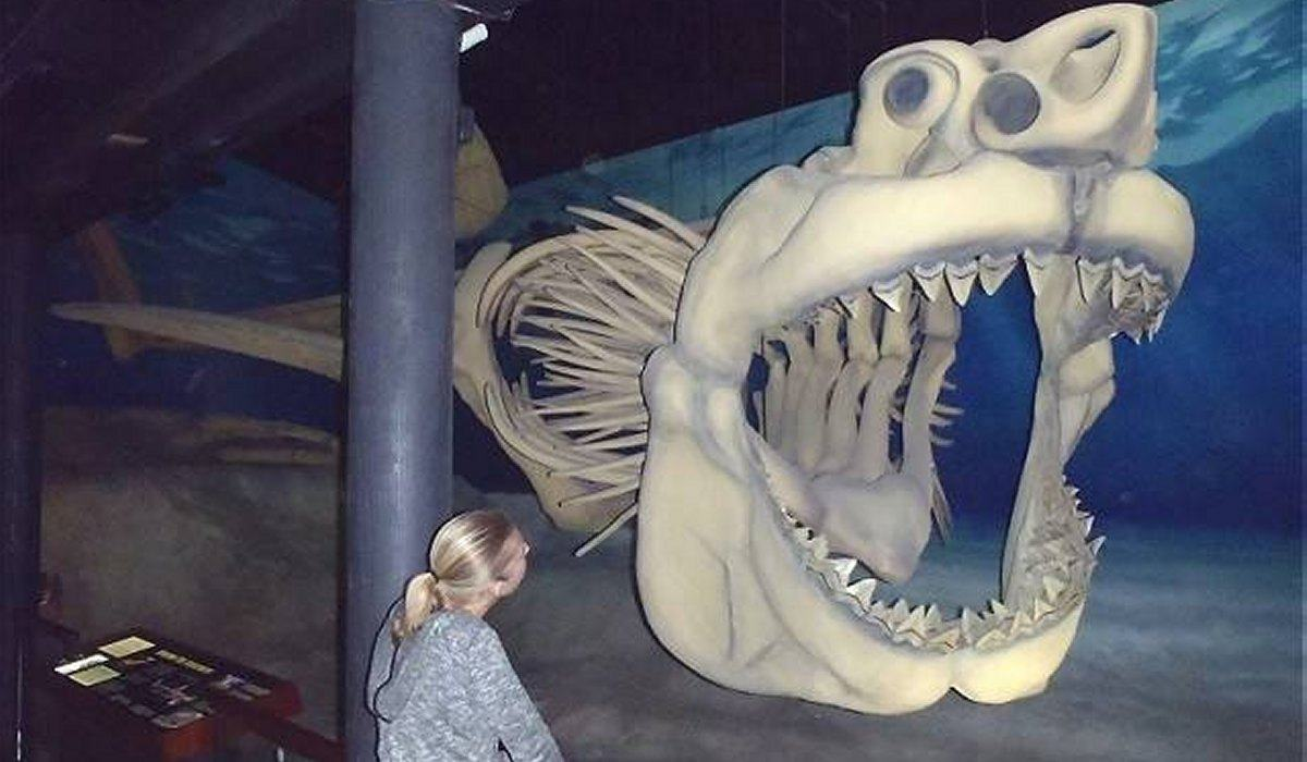 megalodon-facts-shark-meg-photo