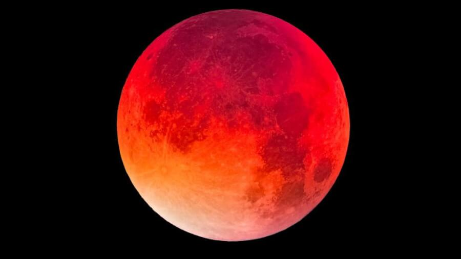 blood-moon-wolf-photo