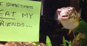 fish-shaming-funny-photo