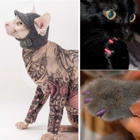 cat-products-crazy-accessories-photo