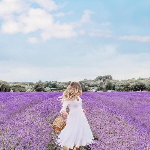 instagram-lavender-trend-photo
